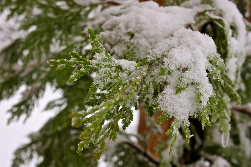 Snow in Calaveras